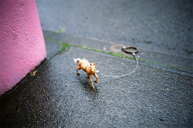 9. There are miniature horses all over Portland.