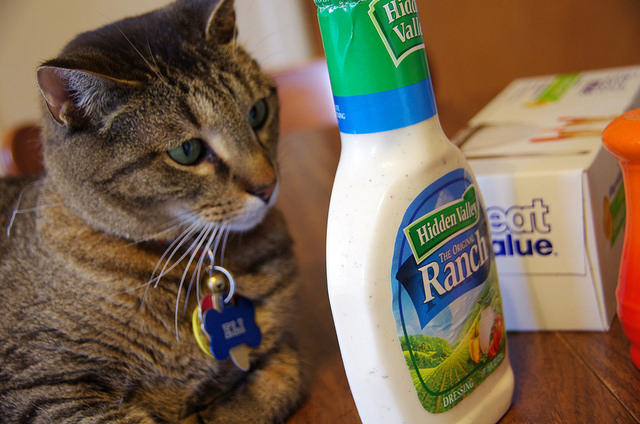 16. Loving ranch so much that even your pets start to question your sanity.