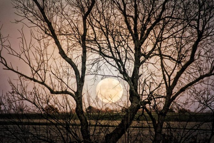 8. In My Own Backyard - Denise Eidemiller took this shot of the full moon rising over a field in Pennsylvania.