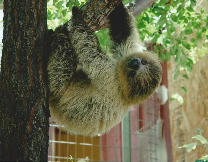 3. Hang with the animals at the Sierra Safari Zoo.
