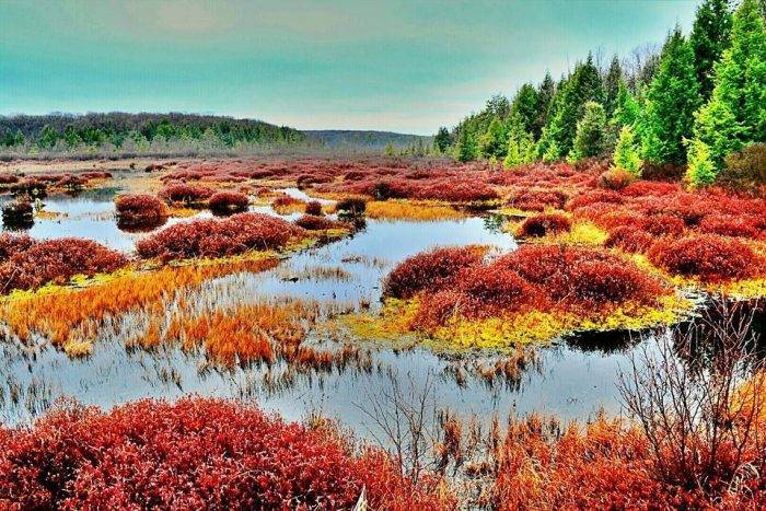 5. The marsh at Black Moshannon State Park is one of the most unique ecosystems in Pennsylvania.