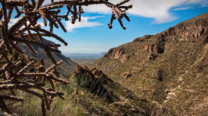 10. Sabino Canyon