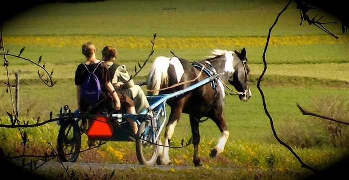 6. The Amish Farmlands Tour, Lancaster