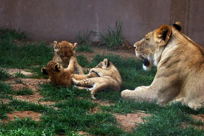 3. Hogle Zoo