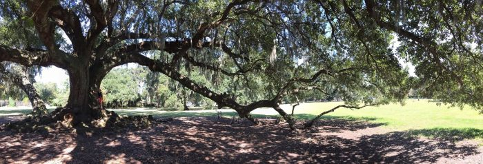 8) The Tree of Life, Audubon Park