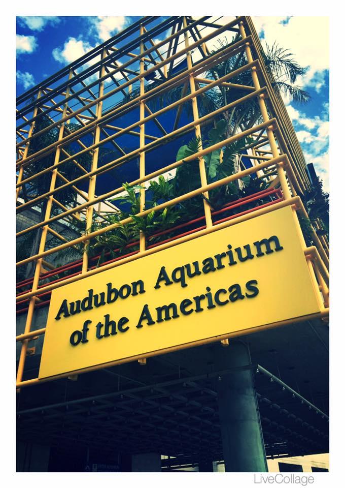 14) Aquarium of the Americas, 1 Canal St.