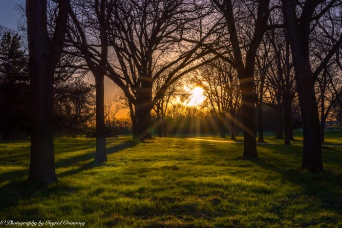 16. The sunset in Pioneers Park in Lincoln is always just unbelievably gorgeous. Those trees, the sunlight painting the lush grass golden...it's magical.