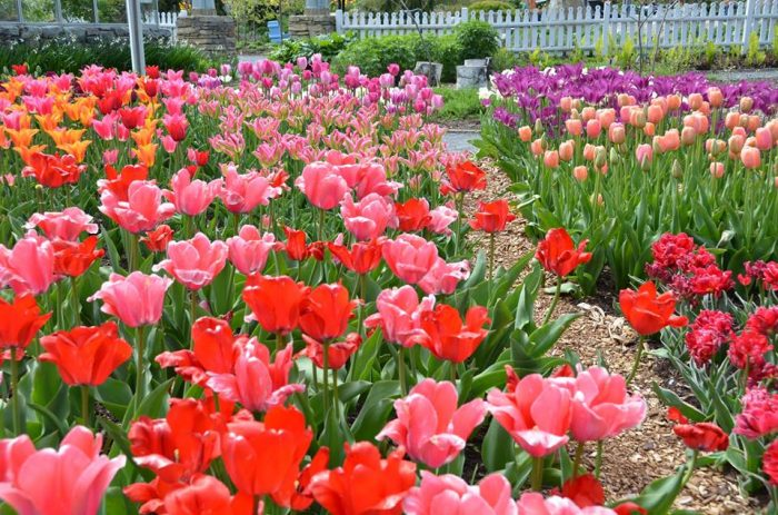 3. Stop to smell the roses (or tulips) at the Coastal Maine Botanical Gardens in Boothbay.