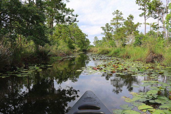 2) Big Branch Marsh National Wildlife Refuge
