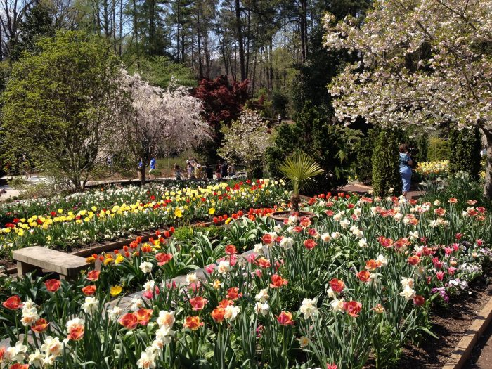 13. Take time to smell the roses at one of North Carolina's many beautiful botanical gardens or parks. Notably, Sarah P. Duke Gardens, Reynolda Gardens, or Daniel Stowe Botanical Garden.