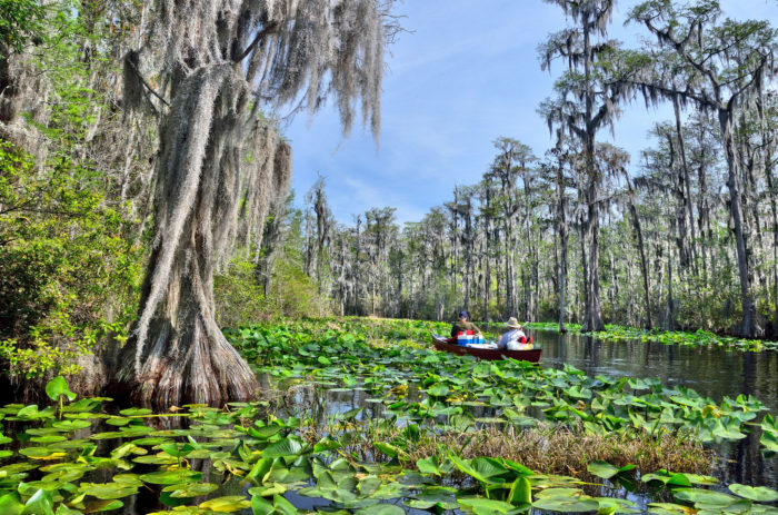 4. The Okefenokee Swamp