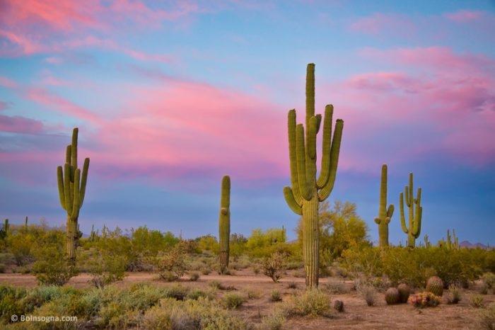 6. Arizona is also home to largest cactus in the United States—our beloved saguaro cactus.