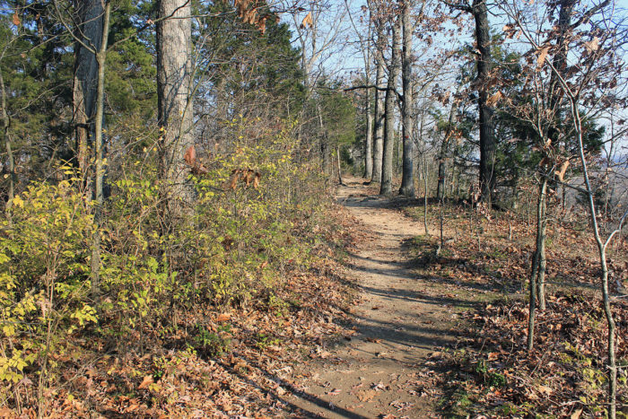 14.2. missouri-castlewood-state-park-forest-path