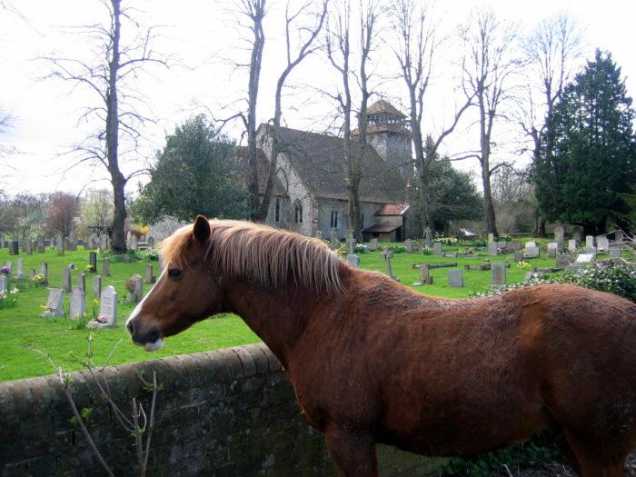 12. Horsey Church Road, Delmar
