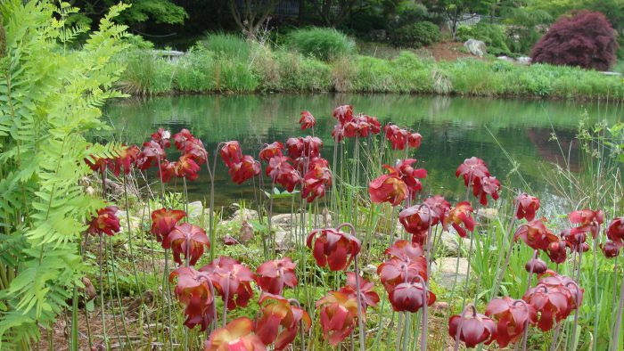 17. Meandering through botanical gardens and parks
