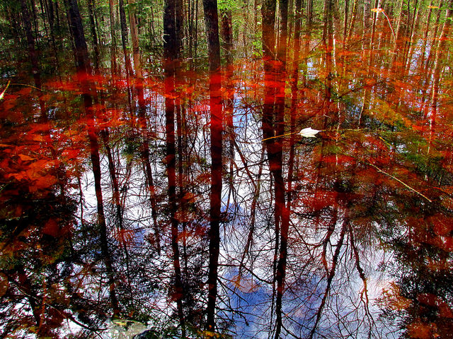 11. This forest reflected in this swamp gives an optical illusion that could let your imagination run wild.