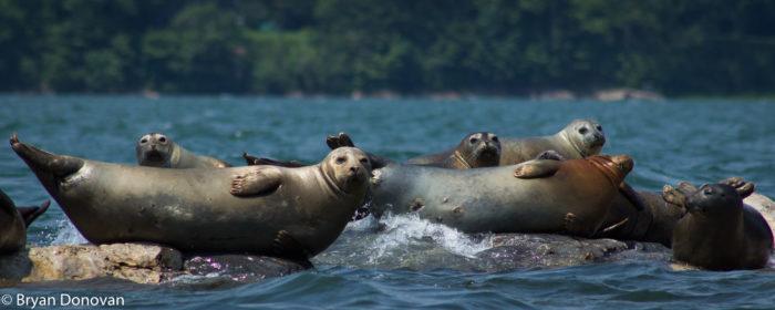 9. Harbor Seals...