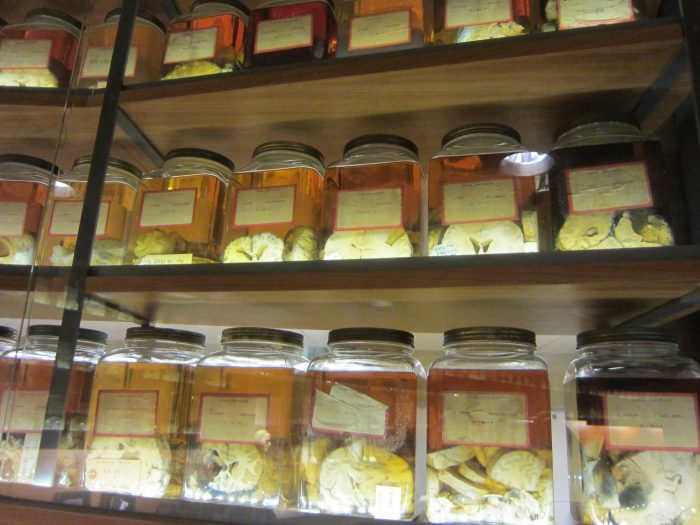 9. Cushing Brain Collection (New Haven)