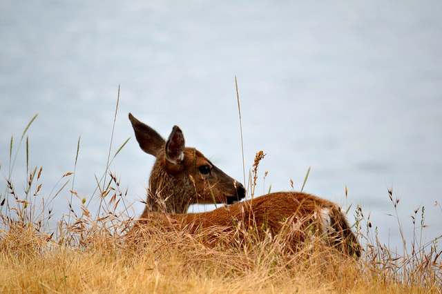 7. Listen for the person who squeels out loud when they see a deer.