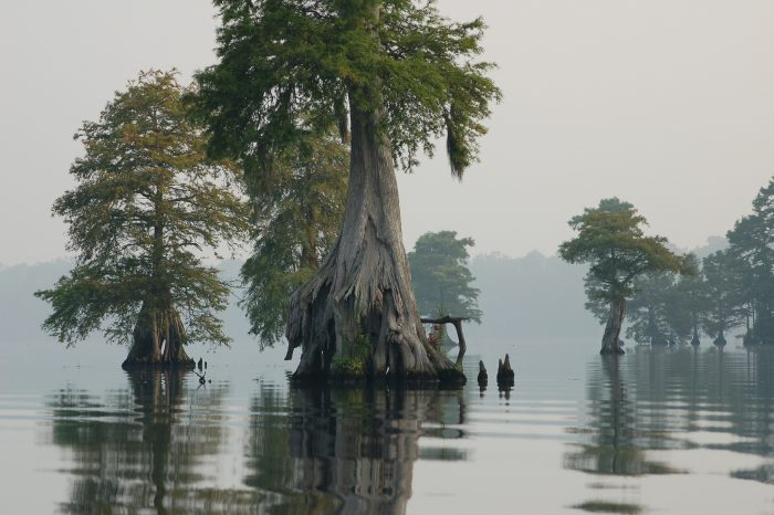 10. Right beside VA, The Great Dismal Swamp is eerie, beautiful, and incredible.