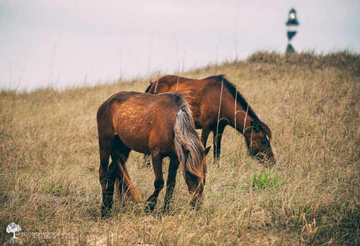 5. Shackleford Banks