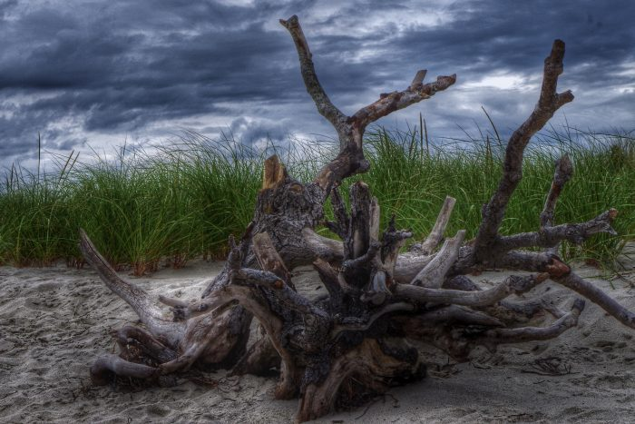 18. A stormy sky and twisted knot of driftwood make this Cape Cod beach shot unlike the usual sunny scenes.