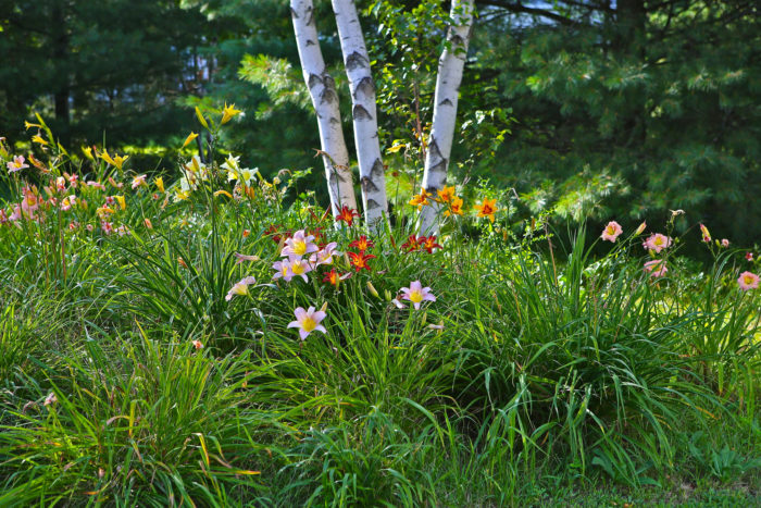 4. In Maine, we get through the winter and are greeted by a hard-earned spring.