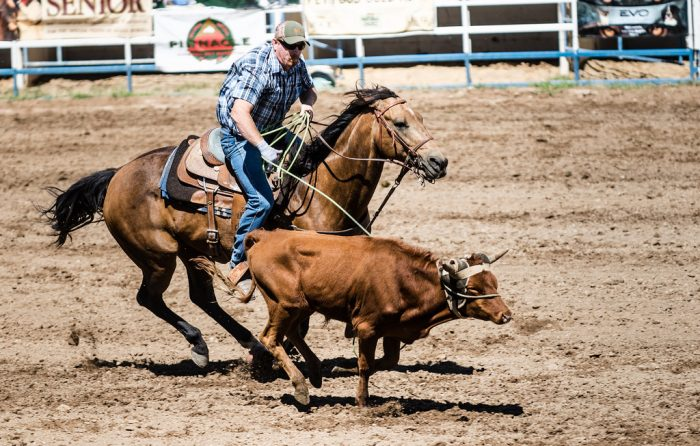 15. And, finally, Arizona is home to the oldest rodeos in the country. Prescott is home to the oldest professional rodeo (1888) and Payson is home to the oldest continuous rodeo (1884).
