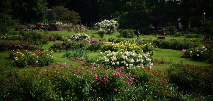 3. Pardee Rose Gardens (Hamden)
