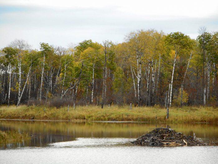 10. Beaver Loop
