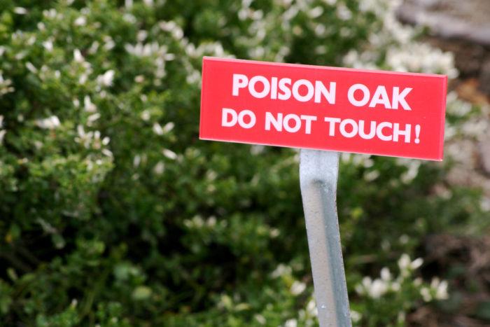4. Poison oak