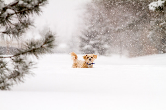 5. Embracing winter weather