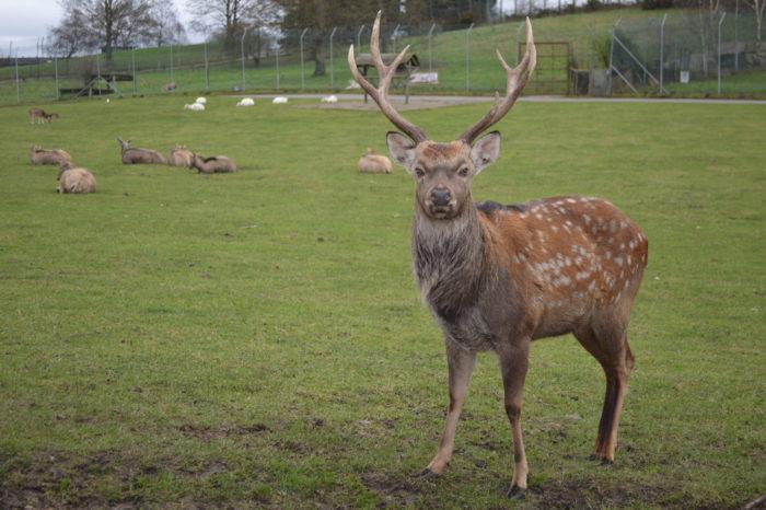 5. You can not pet a deer in Wells.