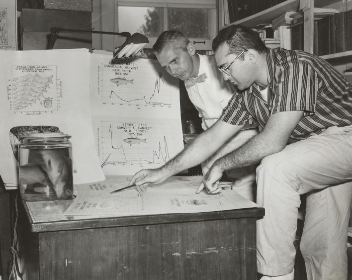 10. Scientists studying rockfish charts at the Chesapeake Biological Laboratory in Solomons. Photo taken in 1957.