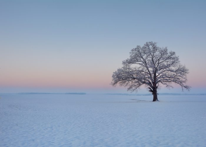 6. A tree stands all alone in the freshly fallen snow in Madison.