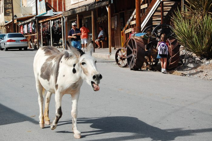 1. Visit Oatman to feed the wild burros that roam the streets.