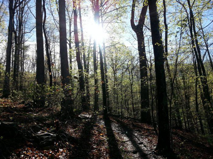3. Arkaquah Trail—Brasstown Bald to Track Rock Gap