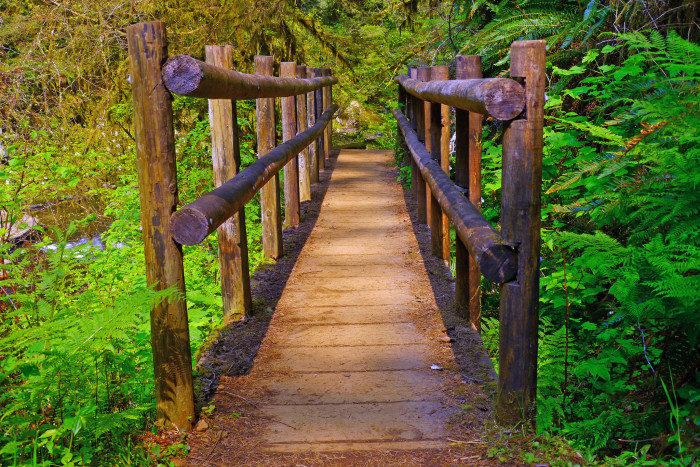 Oregon: Sweet Creek Trail