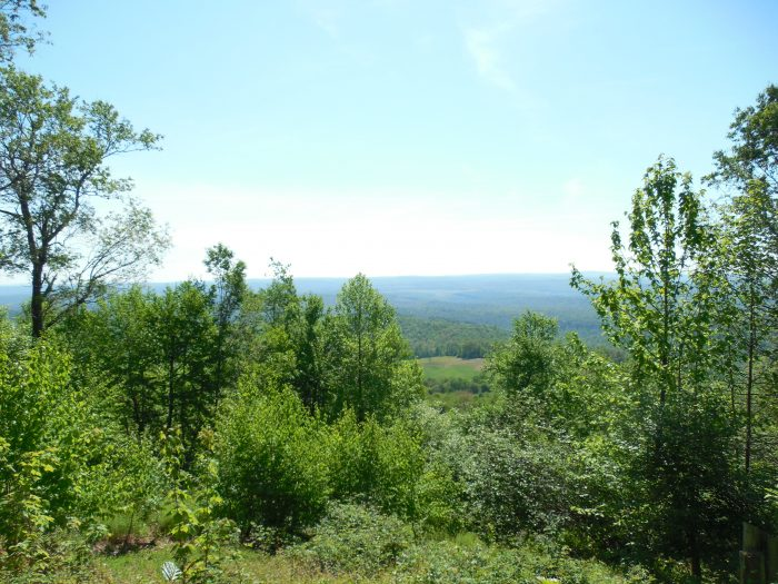 7. Or hike to Maryland's highest point, Backbone Mountain, and take in the beauty of this scene.