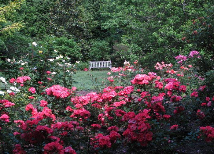 11. Brookside Gardens in Wheaton is perfectly speckled with colorful flowers, making you feel like you're in a painting.