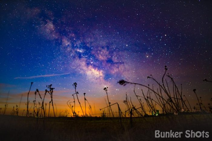 2. Some straggly plants reach up toward the Milky Way in Elmwood.