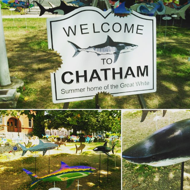 4. Chatham Beaches