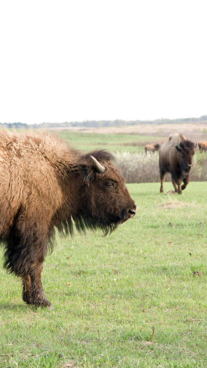 Missouri: Drover's Trail, Prairie State Park