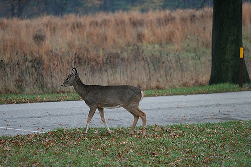 1. You're constantly scanning the road and ditches for deer while driving.
