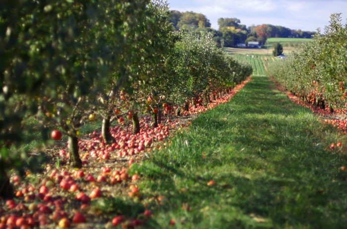 12. You can pick your own fruit at an enchanting orchard or stroll through a sprawling Maryland vineyard.