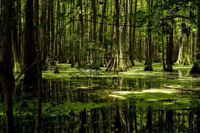 Louisiana: Chicot State Park