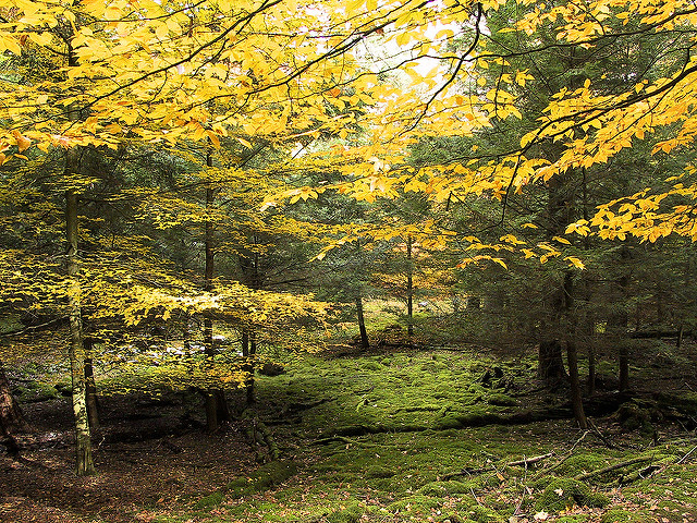 Pennsylvania: Cook Forest State Park