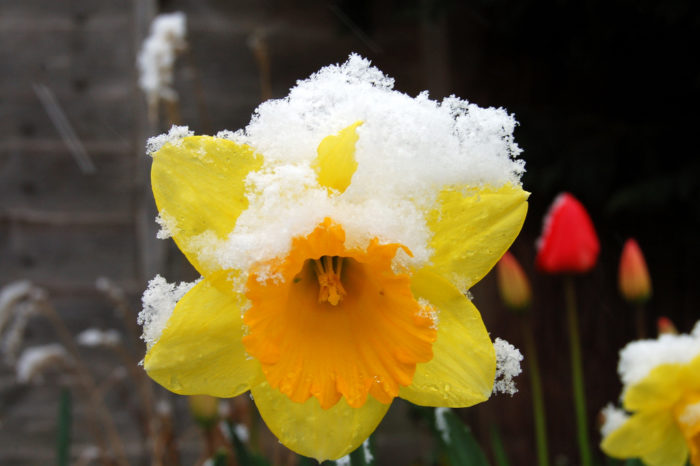 7. Does it really go from winter to spring in the course of one day then back again?