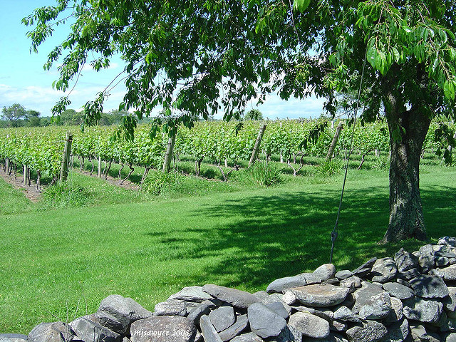 14. Go on a wine tour and tasting