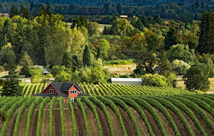 4. Explore Oregon's beautiful wine country.